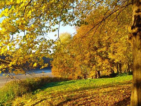 Glücksburg, Forest, Mecklenburg, Leaves, Autumn, Nature