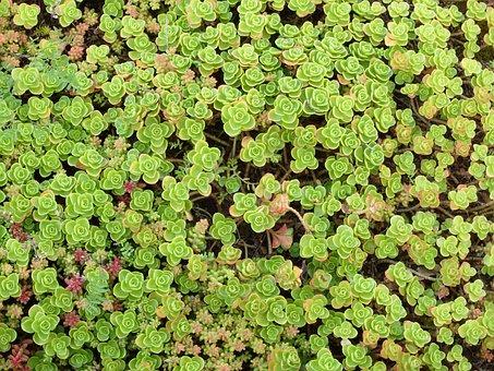 Plant, Flower, Zoom, Botany, Nature, Plants Flowering