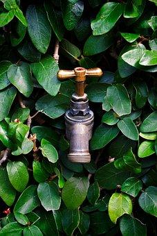 Tap, Faucet, Leaves, Water, Plumbing, Drink, Liquid