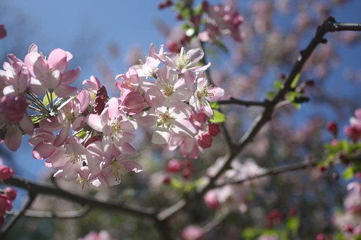 Flowers, Tree, Bush, Spring, Nature, Blossom, Blooming