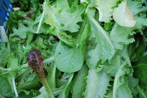 Green, Salad, Fresh, Healthy, Diet, Vegetable, Food