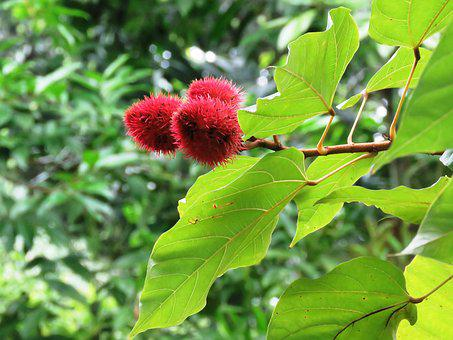 Leaf, Green, Close Up, Natural, Garden