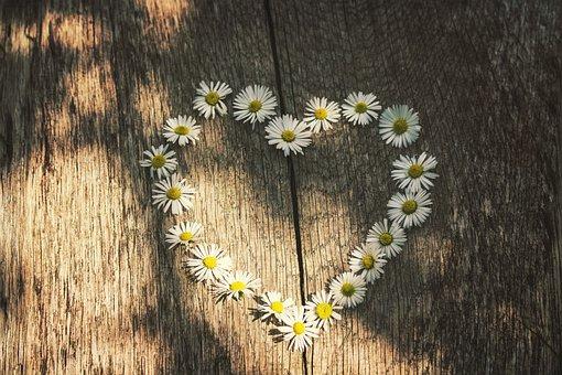 Love, Daisies, Spring, Summer, Rest, Board, Romantic