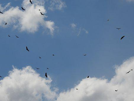 Sky, Birds, Seagull, Fly, Blue Sky, Nature, Tranquility