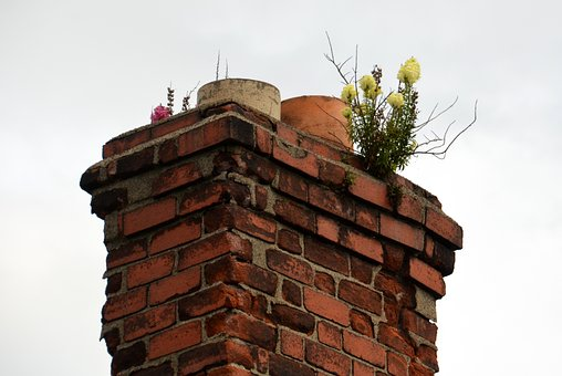 Chimney, Flowers, Fireplace, Ireland, Old, Roof, Plant