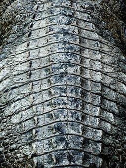 Crocodile, Crocodile Skin, Crocodiles, Alligator
