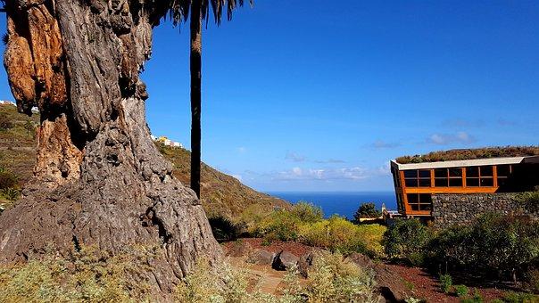 Drago Milenario, Dragon Tree, Tenerife