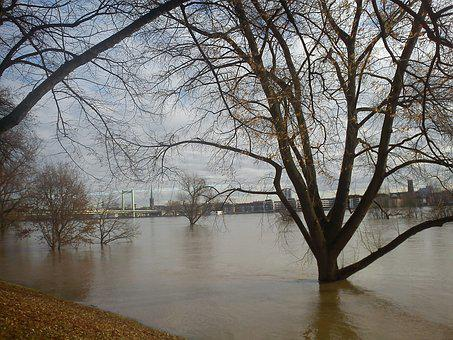 Flood, Cologne, Tree In Water