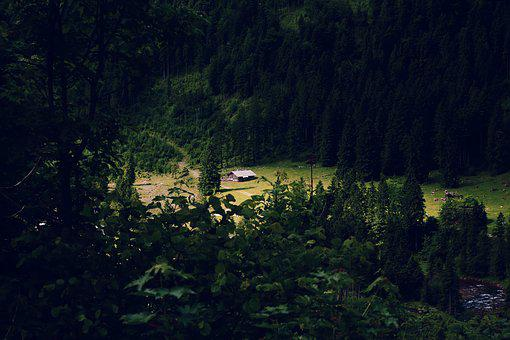 Home, Forest, Lonely, Animals, Nature, Gloomy