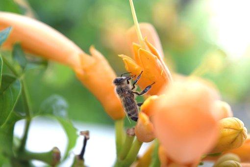 Bee, Flower, Sun, Spring, Nature, Green, Garden, Yellow
