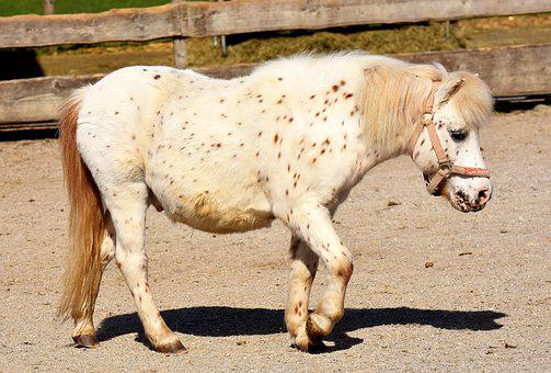 Pony, Horse, White, Cute, Animal, Nature, Seahorses