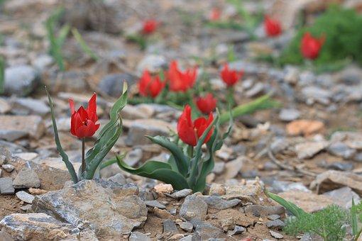 Green, Red, Flower, Garden, Plant, Flowers, Beautiful