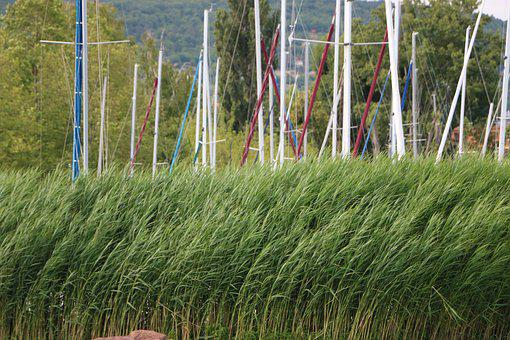 Reed, Aquatic Plant, Mast, Port