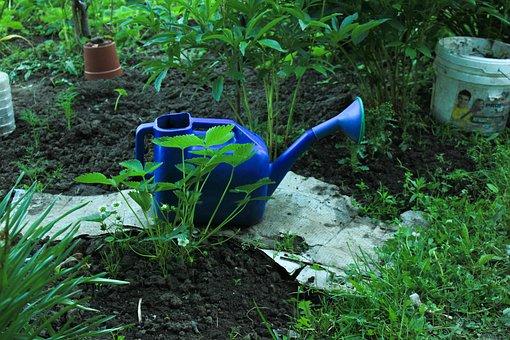 Watering Can, Wild Strawberry, Grass, Garden, Nature