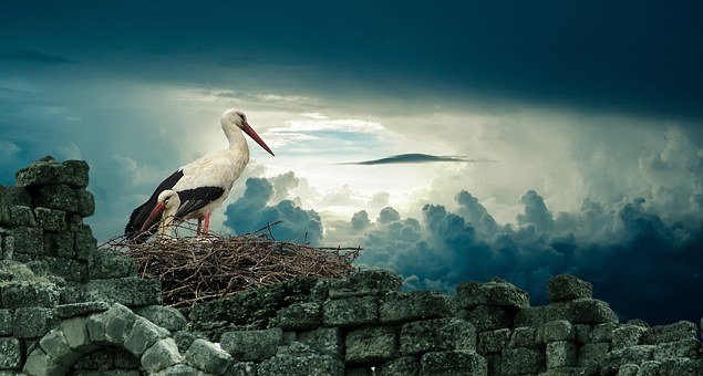 Stork, Nest, Bird, Nature, Wildlife, Animal, Beak, Sky