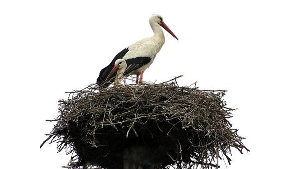 Isolated, White, Stork, Nest, Bird, Nature, Wildlife