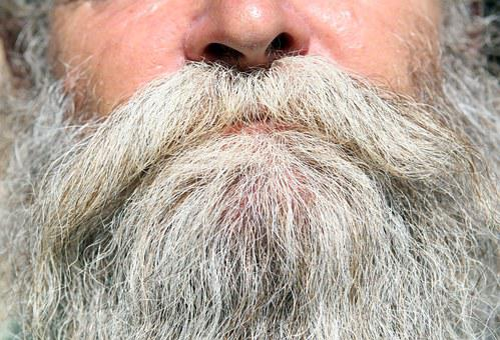 Beard, Black, Boy, Brown, Bush, Bushy, Caveman, Chin