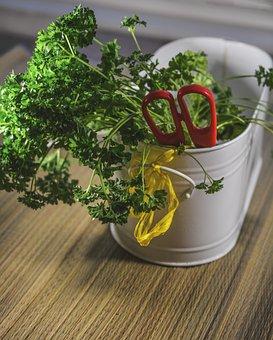 Herbs, Cutting, Scissors, Food, Fresh, Cut, Ingredient