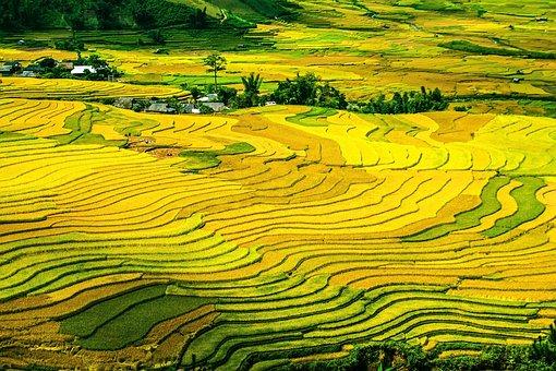 Rice Terraces, Rice Fields, Paddy, Fields, Terraced