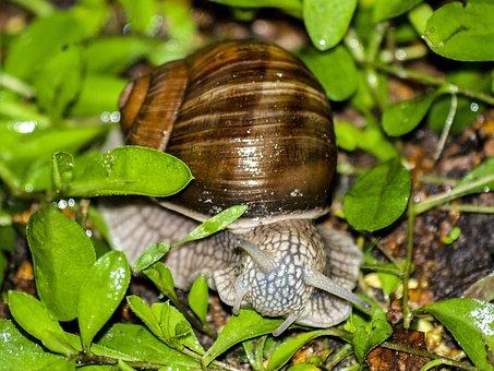 Snail, Reptile, Animal