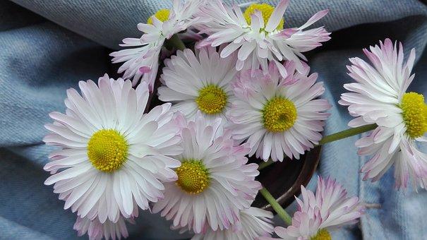 Daisies, Flowers, Summer, Nature