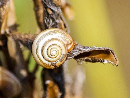 Snail, Reptile, Leaves Snail, Nature