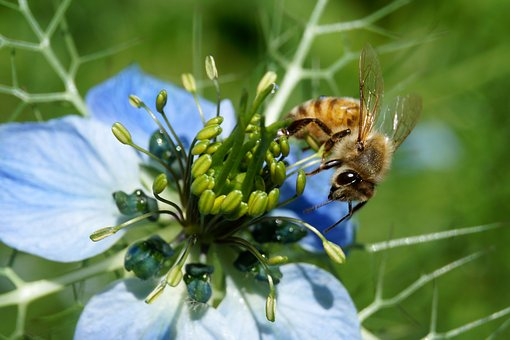 Bee, Summer, Insect, Nature, Flower, Honey Bee, Blossom