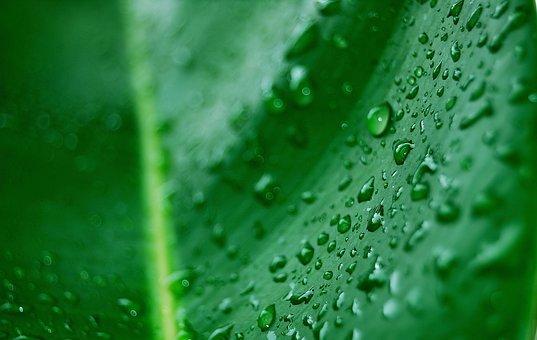 Dew, Leaf, Palma, Green Leaf, Droplets, Drops, Rain