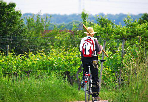 Field, Green, Nature, Cyclist, Village, Spring