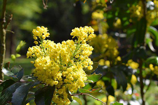 Yellow, Flower, Forest, Nature, Spring, Yellow Flower