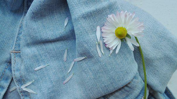 Flowers, Summer, Daisies, Petals