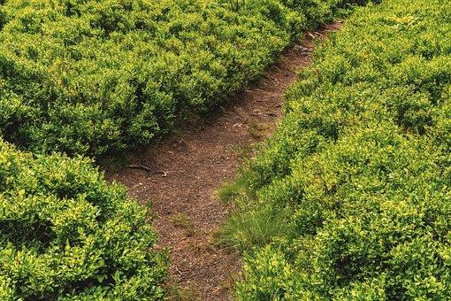 Away, Trail, Nature, Path, Devoured, Landscape, Summer