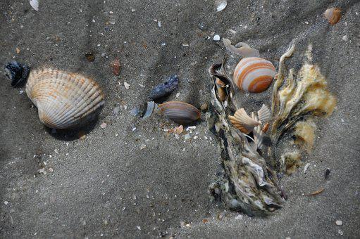 Mussels, Sand, Watts, Wadden Sea, Ebb, North Sea, North
