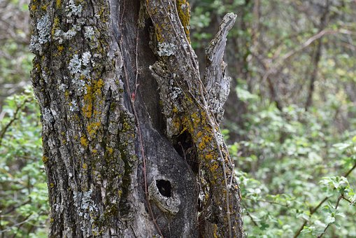 Tree, Age, Knot, Bark, Old, Nature, Plant, Wood, Wooden