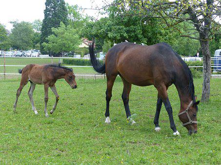 Horse, Foal, Pasture, Animal, Young Animal, Meadow