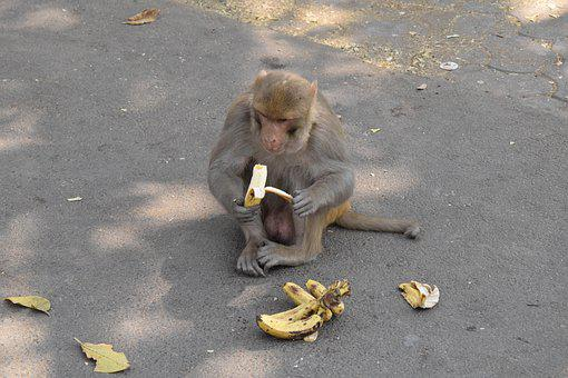Monkey, Road, Concrete, Banana, Away, Wall, Asphalt