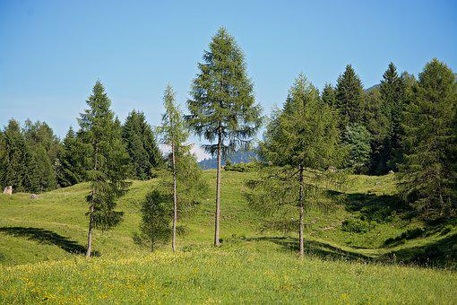 Landscape, Trees, Ways, Natural Meadows, Alpine Meadows