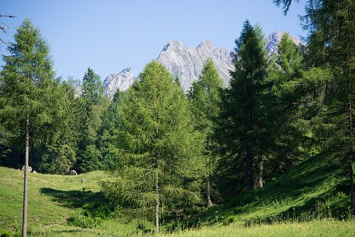 Landscape, Nature, Summer, Meadow, Alpine Meadow, Trees