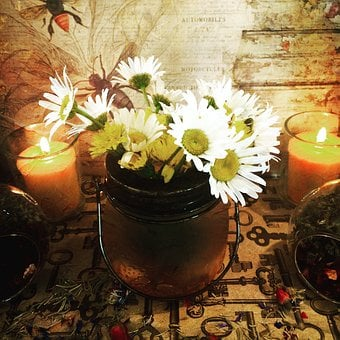 Flower, Garden, Nature, Spring, Green, Summer, Floral