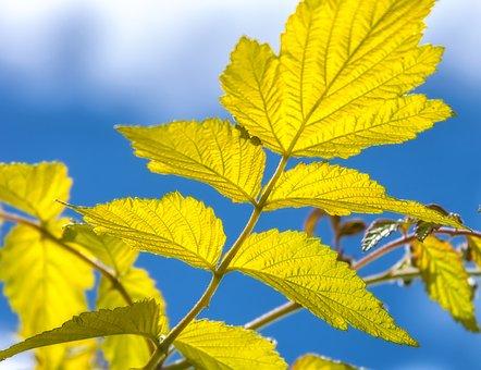 Summer, Leaf, Back Light, Nature, Plant, Branches, Sun