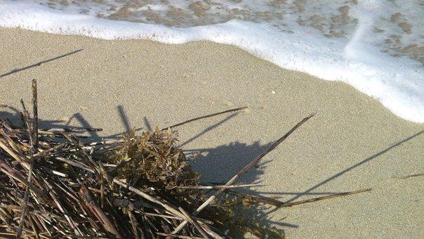 Ocean, Seaweed, Surf, Ebb, Flow, Sand, Natural, Sea