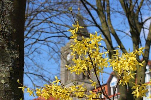 Spring, Forsythia, Tree, Yellow, Plant