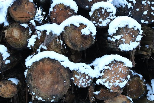Wood, Holzstapel, Winter, Firewood, Stacked Up
