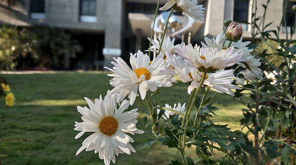 Flowers, Nature, White, Garden, Bloom, Sunny, Day