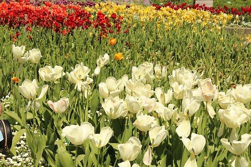 White, Red, Money, Green, Blossom, Bloom, Flower