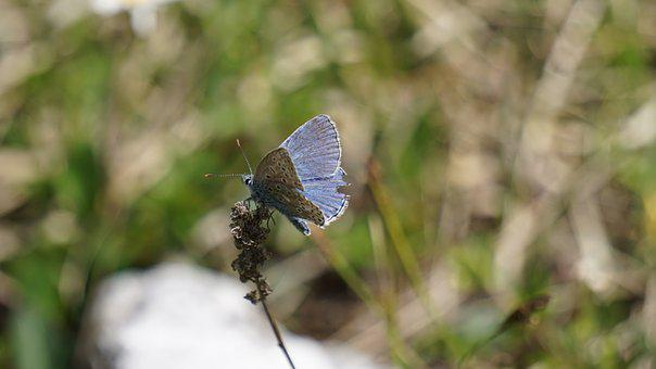 Butterfly, Blue, Insect, Wing, Close, Nature