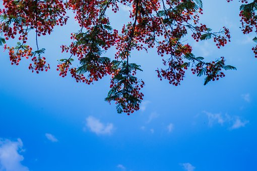 Tree, Red, Flowers, Branch, New, Park, Outdoor, Bright