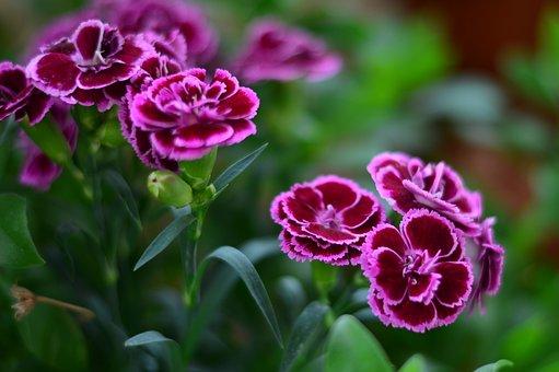 Flower, Macro, Nature, Plant, Macro Chichewa, Close