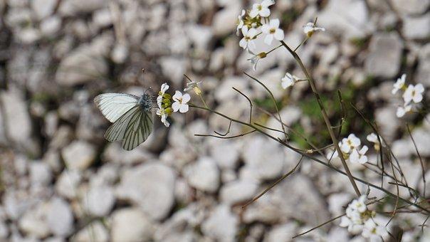 White, Pebble, Butterfly, Stones, Gravel, Grey, Steinig