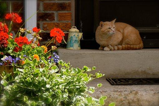 Cat, Summer, Porch, Kitty, Relax, Orange, Tabby